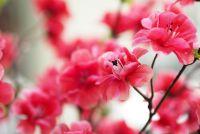 Umelé kvetiny budú ozdobou Vášho domova
