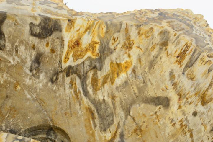 Umývadlo z prírodného kameňa FOSSIL DIVERO - veľké
