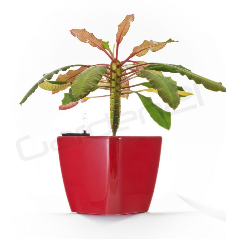 Samozavlažovací kvetináč G21 Cube červený 22cm