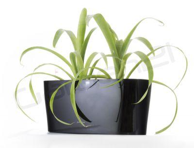 Samozavlažovací kvetináč G21 Combi mini čierny 40cm