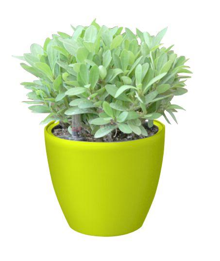 Samozavlažovací kvetináč G21 Ring mini zelený 15cm