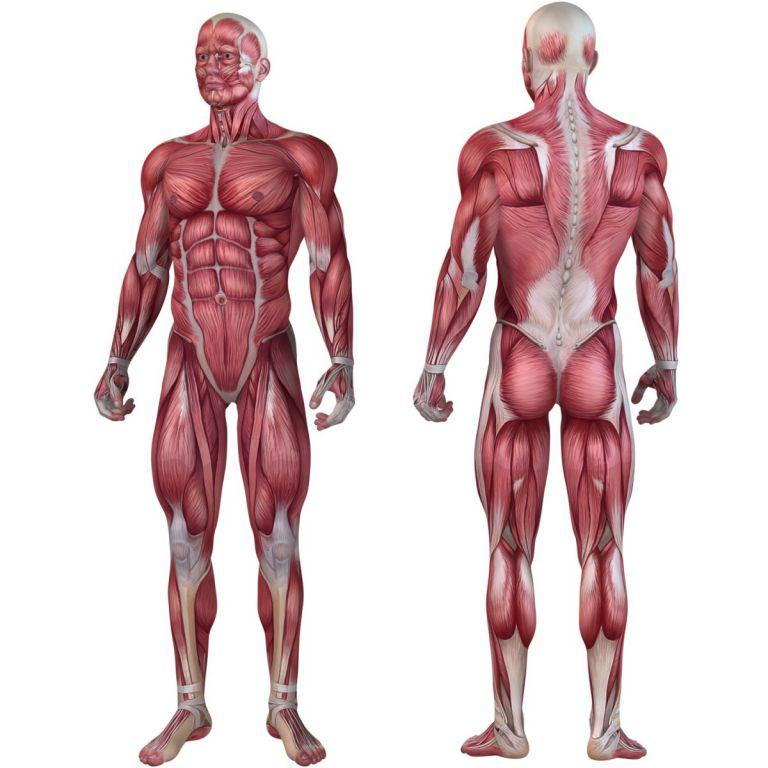 Posilňovací masážny valec - FITNESS ROLLER MOVIT sivá