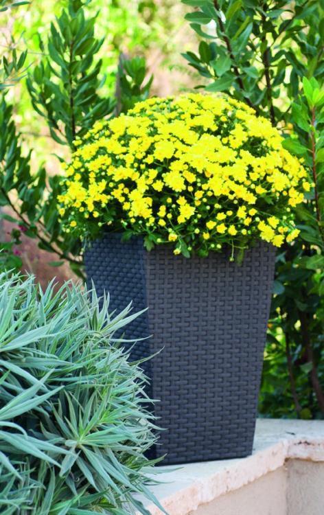 Kvetináč ratahového vzhľadu plastový – S